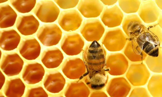 Самой лучшей добавкой к имбирному чаю – лучшей во всех смыслах! – является мед.