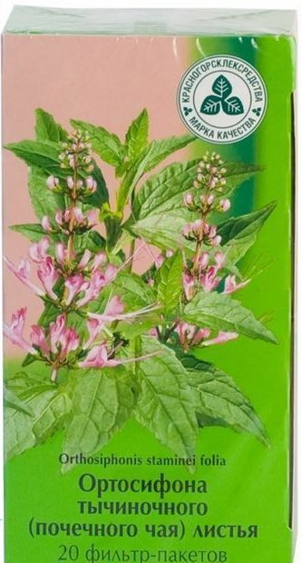Ортосифона тычиночного почечного чая листья