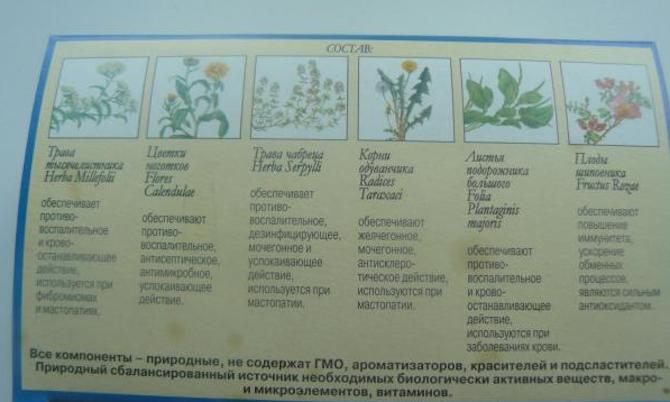 Чай мастофитон состав